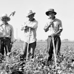 Laborers in sugar beet fields outside of Shelley, Idaho. Library of Congress, Prints & Photographs Division, Farm Security Administration-OWI Collection (Courtesy of the Japanese American National Museum)