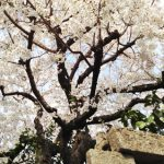 Handa Sakura