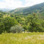 2018621 Rinri EMAC Forest